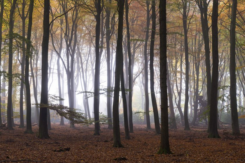 Magical Forests by Albert Dros. How to shoot and edit forest images Image5