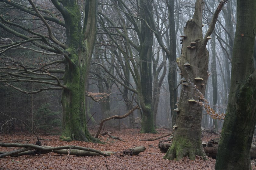 Magical Forests by Albert Dros. How to shoot and edit forest images Image7