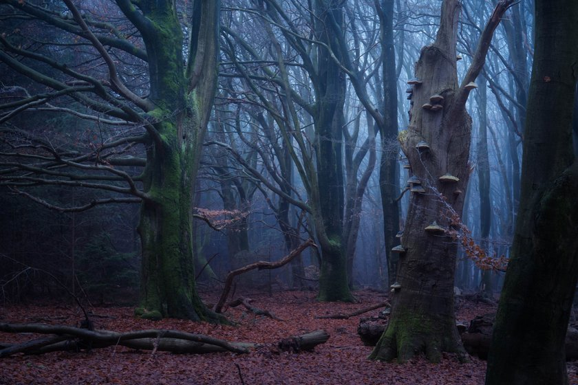 Magical Forests by Albert Dros. How to shoot and edit forest images Image8