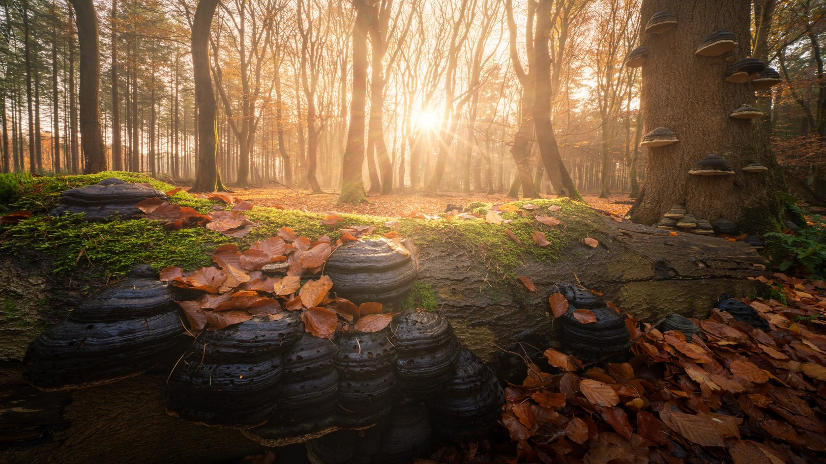 Magical Forests by Albert Dros. How to shoot and edit forest images Image1