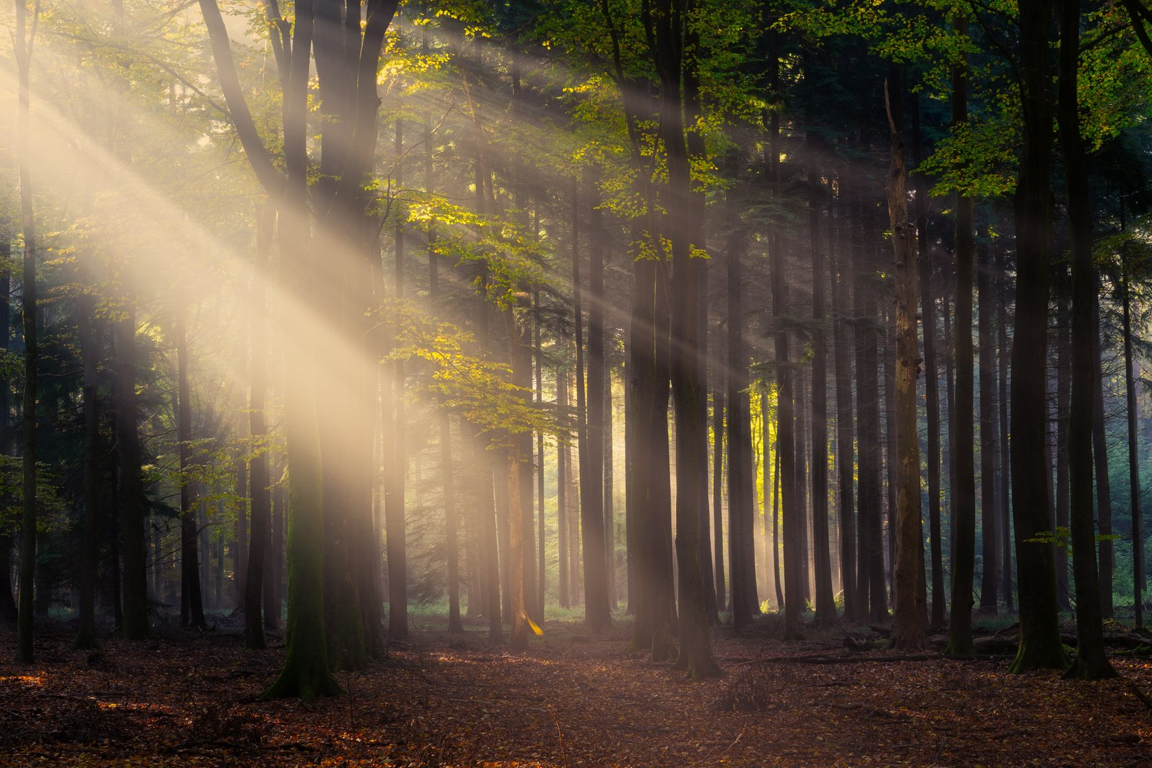 Magical Forests by Albert Dros. How to shoot and edit forest images Image2