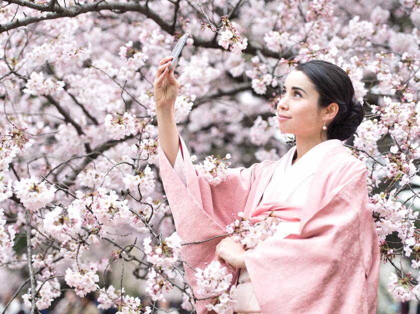 桜の撮影 Image1