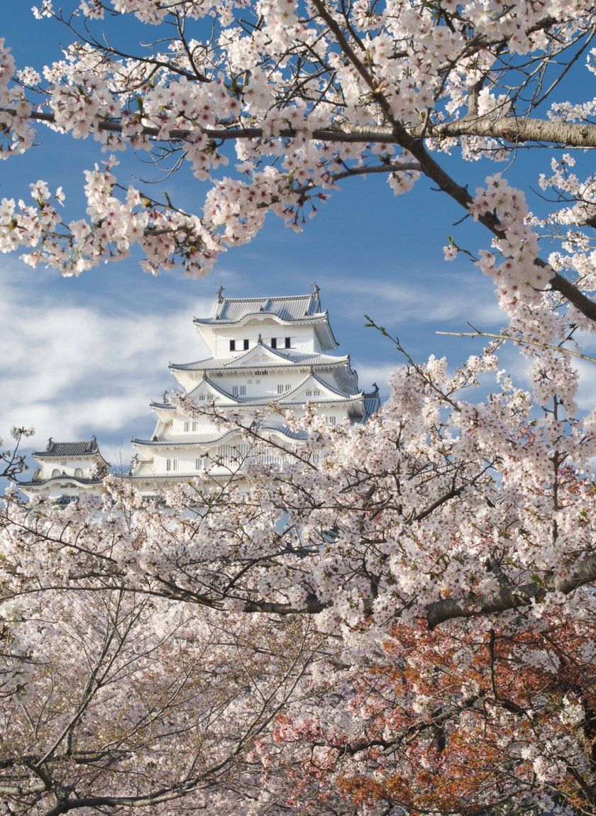 桜の撮影 Image2