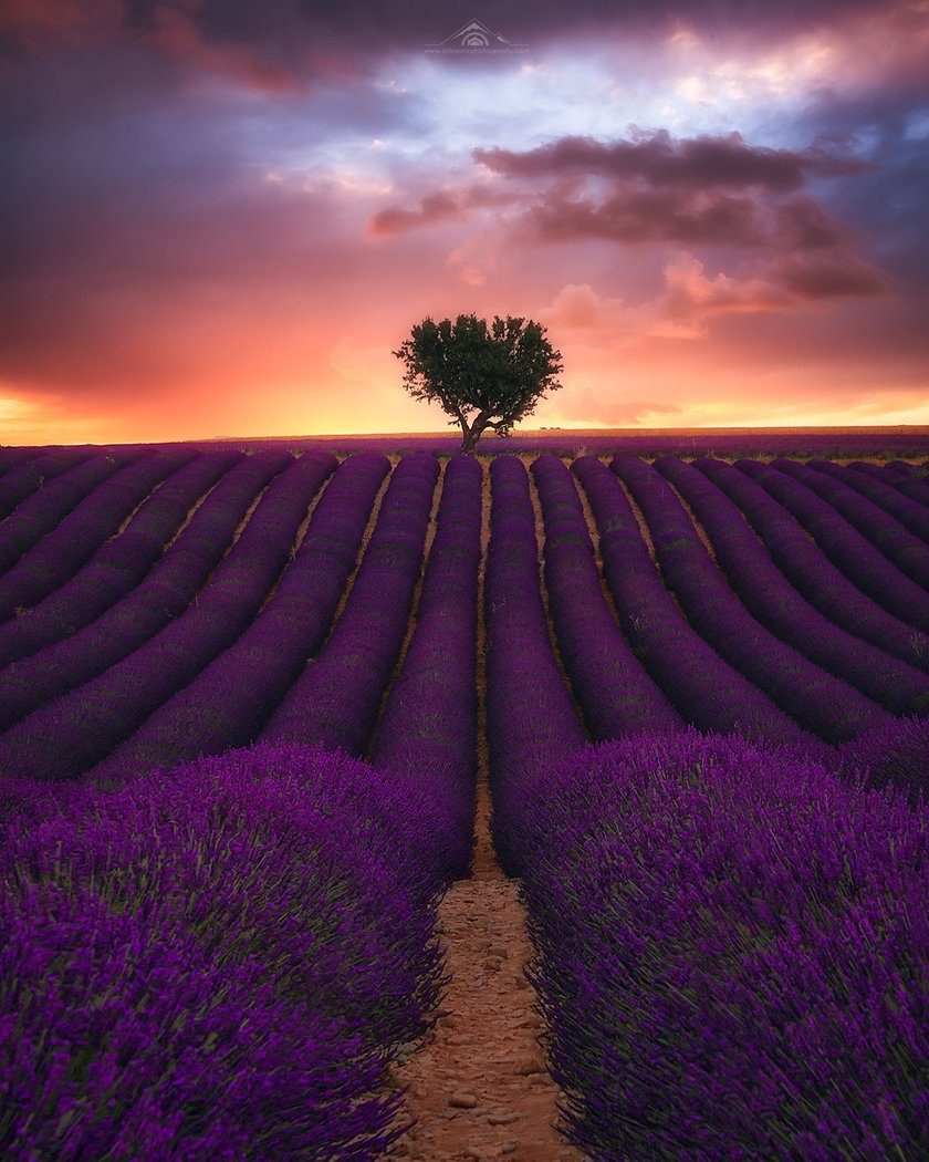 Best photography spots in Valensole by Jabi Sanz Image1