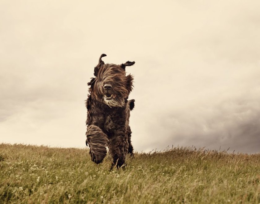Your photo inspiration: Cats vs. Dogs Image12