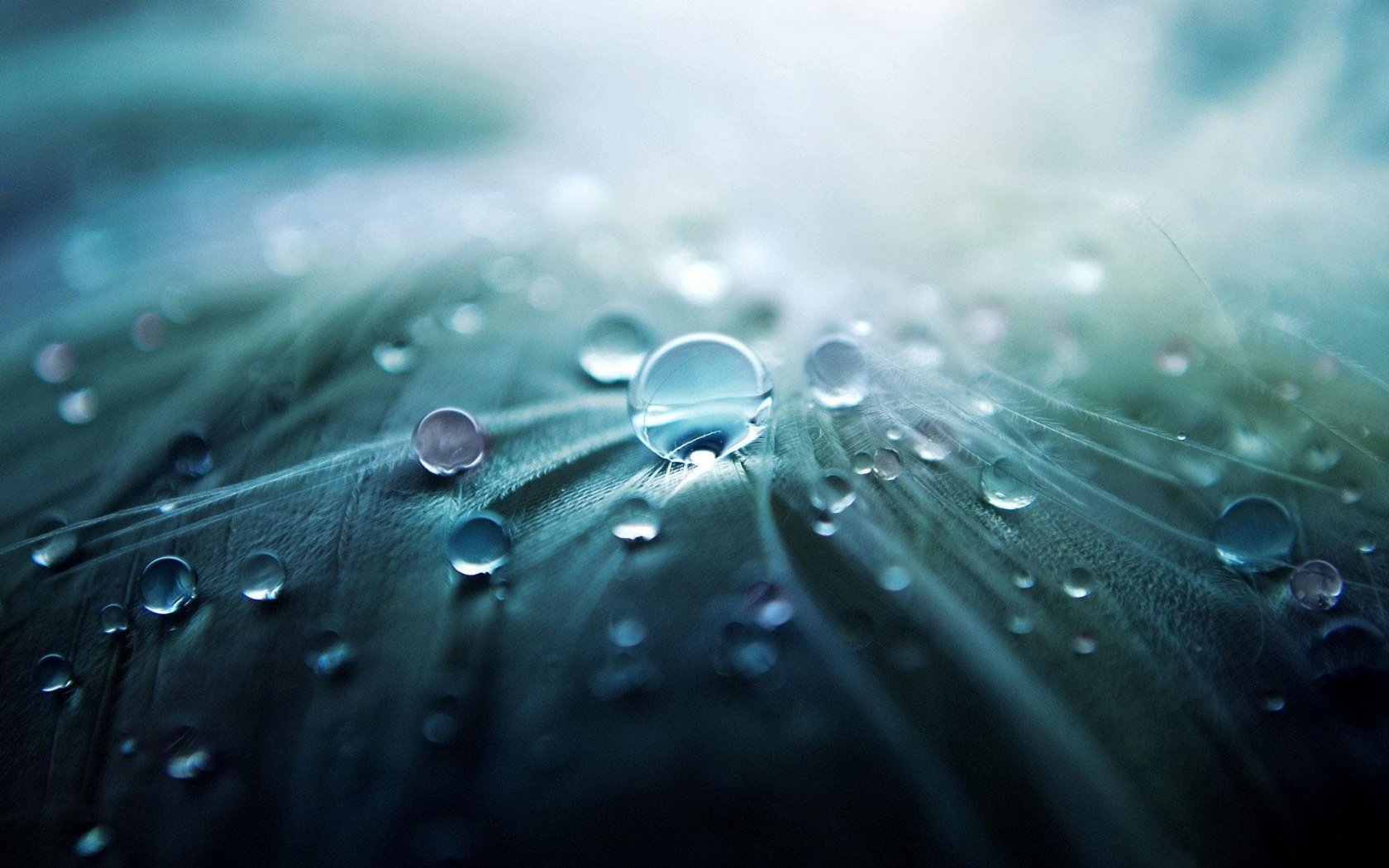 5 Tips for Water Droplet Photography Image3