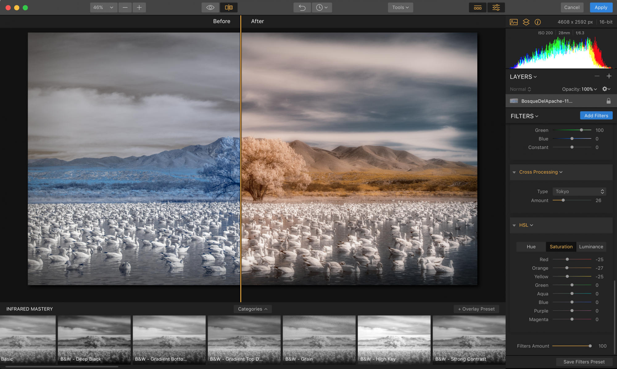 The Magical World of Infrared Photography Image3