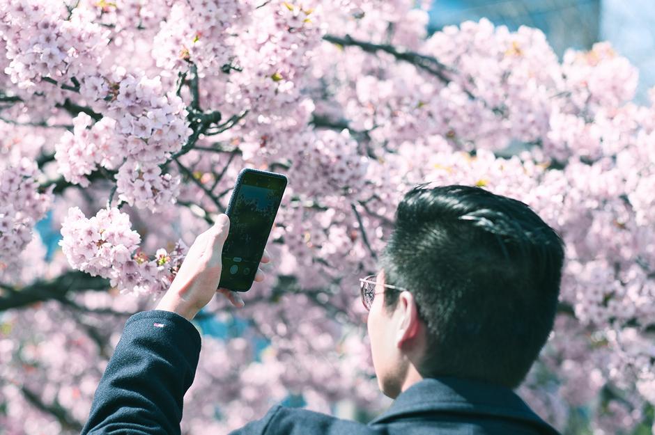 Sakura Blossom Looks